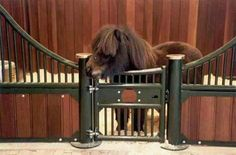So adorable!! Tiny little stable door for a tiny little pony!