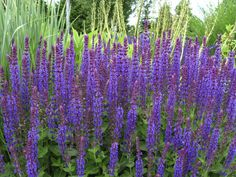 Plants you (probably) won't kill. Tough, Fool-Proof Varieties >> www.hgtv.com/gardening/tough-as-nails-plants/pictures/page-8.html?soc=pinterest