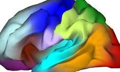 First 'genetic atlas' of the brain