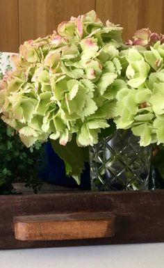 Wie mache ich Blumen haltbar? Es wäre doch ganz wunderbar, wenn wir den   Sommer ein wenig konservieren können. Am besten macht sich das mit   Blüten. Blumen und Blüten kann man einfach mit Glycerin konservieren.   Wie das ganze funktioniert erfahrt Ihr auf unserem Blog.
