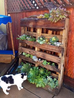 1000 images about succulent containers on pinterest for Pallet succulent garden