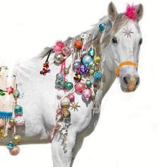 Cody Foster horse… LOVE THIS PICTURE.  WANT HIM AS A HOUSE PET.  LESLIE