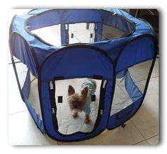 57' x 57' x 36' Blue 600D Oxford Portable Pet Puppy Soft Tent Playpen Dog Cat Crate Pet * Trust me, this is great! Click the image. : Dog cages