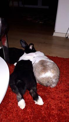 Funny Bunnies, Baby Bunnies, Cute Bunny, Bunny Rabbit, Baby Animals, Funny Animals, Cute Animals, Dwarf Bunnies, Giant Bunny