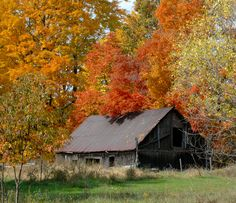 How I love old barns in the fall.  Up-north Michigan  2011