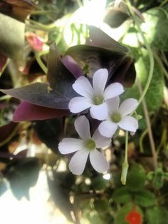 Bela mini flor