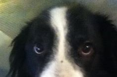 Help support Snoozie Needs An Operation.