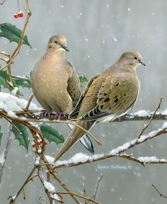 A couple of doves. Cool Paintings, Animal Paintings, Animal Drawings, Dove Pictures, Bird Pictures, Missouri Birds, Painting & Drawing, Watercolor Paintings, Dove Hunting