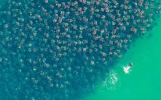 Winner of the Underwater group and overall winner of the competition: 'Flight of the Rays' by Florian Schulz from Germany, which shows an unprecedented congregation of Munkiana Devil Rays in Baja California Sur, Mexico