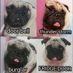 Pugs have a variety of facial expressions. For that reason, pug memes are funny and I hope these 101 dog memes featuring pugs bring a smile to your day! Funny Animal Jokes, Funny Dog Memes, Cute Funny Animals, Funny Cute, Funny Dogs, Pug Dogs, Doggies, Cat Memes, Beagle Funny