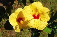 Hermosa vegetación.  http://www.vivenza.info/index.php/es/contacto — at Anapoima Cund.