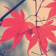 What's your favorite #FallScent? Here are a few ideas! http://tsilaorganics.com/fall-scents-to-fit-your-organic-lifestyle/
