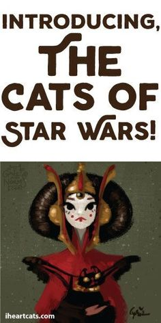 Introducing: The Cats of Star Wars