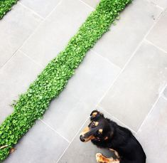 From Sabo Design Tiles, Australia, Garden, Plants, Inspiration, Design, Room Tiles, Biblical Inspiration, Garten