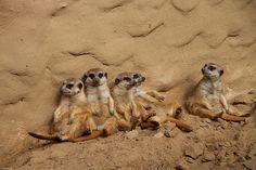 Genieten in de zon @ Zoo Osnabrück