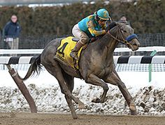 Zayat Stables' El Kabeir continued his success on the New York circuit March 7, running to a polished victory in the $400,000 Gotham Stakes (gr. III) at Aqueduct Racetrack.