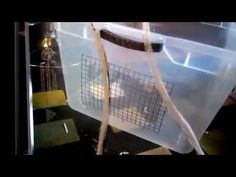 Hamster care on pinterest hamsters hamster cages and for Hamster bin cage tutorial