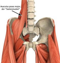 """Wie dein """"Seelenmuskel"""" deine Ängste beeinflussen kann Body and mind are closely linked. There is a certain muscle in our body that can affect our fears, Fitness Workouts, Yoga Fitness, Muscle Fitness, Health And Wellness, Health Tips, Health Fitness, Psoas Release, Psoas Muscle, Angst"""