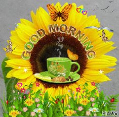 Start your day with sending beautiful Good Morning GIFs. Send Funny Morning Love GIFs, Pictures, animated morning flower GIFs to share with your friends and family members. Find Funny GIFs, Cute GIFs, Reaction GIFs and more. Good Morning Smiley, Good Morning Sister, Good Morning Wednesday, Good Morning Handsome, Cute Good Morning Quotes, Good Morning Happy, Good Morning Picture, Good Morning Flowers, Good Morning Messages