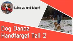 Movie Posters, Movies, Dog Training School, Pooch Workout, Cats, Life, Film Poster, Films, Movie