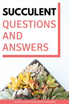 Get all your succulent questions answered and find valuable care tips for your plants. These topics are definitely at the top of the list of commonly asked questions and will also provide a great foundation for you to grow healthy succulents! How To Water Succulents, Indoor Succulents, Succulent Soil, Types Of Succulents, Propagating Succulents, Growing Succulents, Succulents In Containers, Succulent Terrarium, Succulents Garden