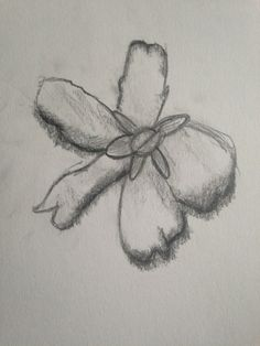 A drawing of a flower I saw in Madrid using a traditional shading technique capturing the delicate nature of the flower.