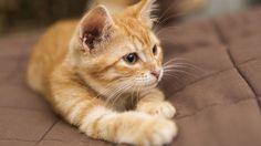 Pour que votre chat s'occupe en votre absence, il existe de plus en plus d'accessoires spécialement élaborés pour leur tenir compagnie.