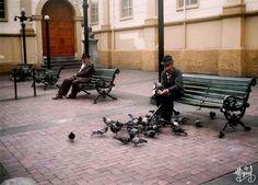 El señor de las palomas