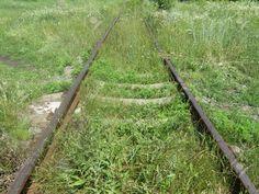 49122084-Abandoned-rusty-rails-overgrown-with-wild-grass--Stock-Photo.jpg (1300×975)