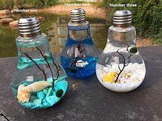 Learn how to make your own easy Marimo moss ball DIY light bulb aquarium! These tiny aquariums make a great home for tiny Japanese Marimo moss balls. NewDreamWorld Marimo Terrarium Kit-Miniature Underwater Aquarium, Lightbulb Terrarium with Moss Ball, Sto Diy Aquarium, Aquarium Lighting, Light Bulb Art, Light Bulb Crafts, Diy Simple, Easy Diy, Terrariums Diy, Mini Terrarium, Terrarium Ideas