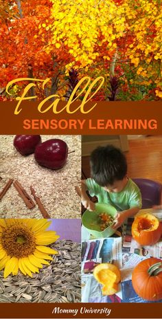 Fall Sensory Learning: Fall brings opportunities for sensory learning and Mommy University has put together five sensory activities which can be found on www.MommyUniversityNJ.com
