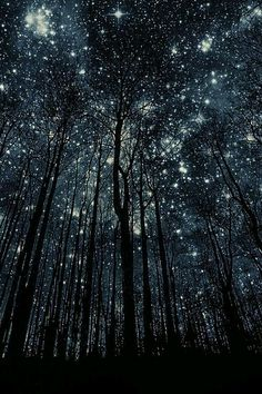 """""""Meet me at midnight in the forest of my dreams.. We'll build a fire and count the stars that shimmer above the trees."""" ~ Christy Ann Martine"""