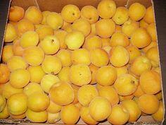 Albaricoques variedad Ninfa de Badajoz