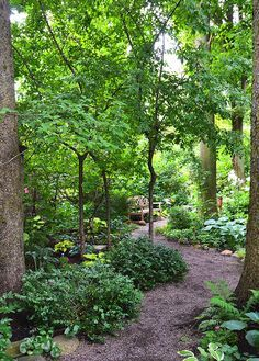 This garden is a shade lover's dream garden with towering trees and paths to intimate spaces. I