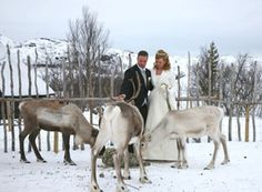 Ice hotel wedding in Finland