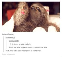 The best description of sloths...It's so accurate though!