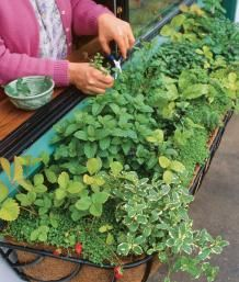 Herbs for Every Window Box | Fine Gardening  Grow herbs where they will be easy to tend and convenient to use!