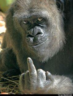 Ce n'est pas au vieux singe qu'on apprend à faire la grimace - You won't learn a old monkey how to make a face