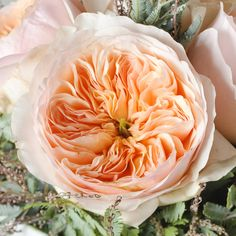 2017 Garden Rose wedding trends! Your  #1 source for DIY Garden Roses! www.weddingrosesdirect.com #gardenrosebouquet #diyflowers #davidaustin  #bouquet #diybouquet #juliet #pinkgardenroses #fuchsiaroses #centerpiece