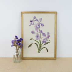 Lámina botánica antigua, género Iris | Antic&Chic