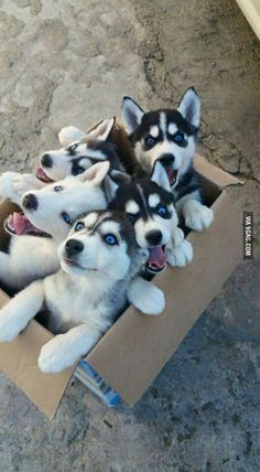 It would be great if I have a husky... or 2... ok, 5 like this would be awesome