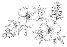 Dibujo para colorear unas flores bonitas. Beautiful flowers coloring page