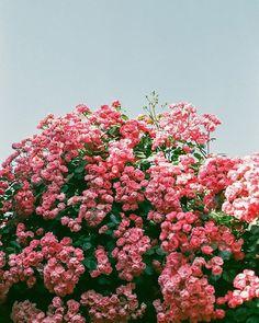 Pinned by @apothecaryteaandgallery #springflowers #bloomingtrees #bohemian