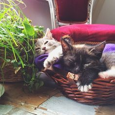 Moos & Mila went out playing on the roof terrace (under my supervision of course) and now they are exhausted! @moosmila #cuties #cats #kitties #kittens #katten #schattig #sleepy