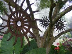 Jeff's garden in Tennessee--click through for more photos of this garden