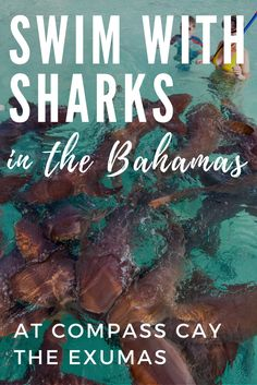 Adventure Travel Features -Bahamas Sharks at Compass Cay in the Exuma Bahamas. Swim with these Bahamas Sharks, known as Nurse Sharks, on your Bahamas Vacation. For the perfect Bahamas honeymoon or Bahamas wedding ideas read our top things to do in Bahamas. Visit Exuma Bahamas to see the Bahamas Sharks close to Staniel Cay. Exuma Bahamas also has some of the best Bahamas Beaches including the famous Bahamas Pigs (Exuma Pigs) at Pig Beach., Big Major Cay ... See more @gr8traveltips