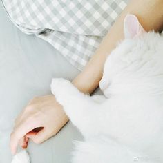 Please be kind to animals! My Love Photo, Nice Picture, Animals And Pets, Cute Animals, Hand Photography, Jumin Han, Natsume Yuujinchou, All About Cats, Pet Life