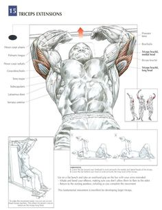 Skull crushers/Tricep extensions