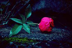 deadly rose by André Lui Bernardo on @creativemarket