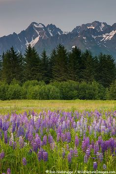 Mt. Alice in the Chugach National Forest from Seward, Alaska